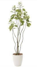 フィカスブランチツリー1.3m